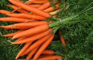 morkov 300x194 - морковь